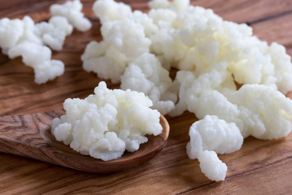 kefir nutrition adventures