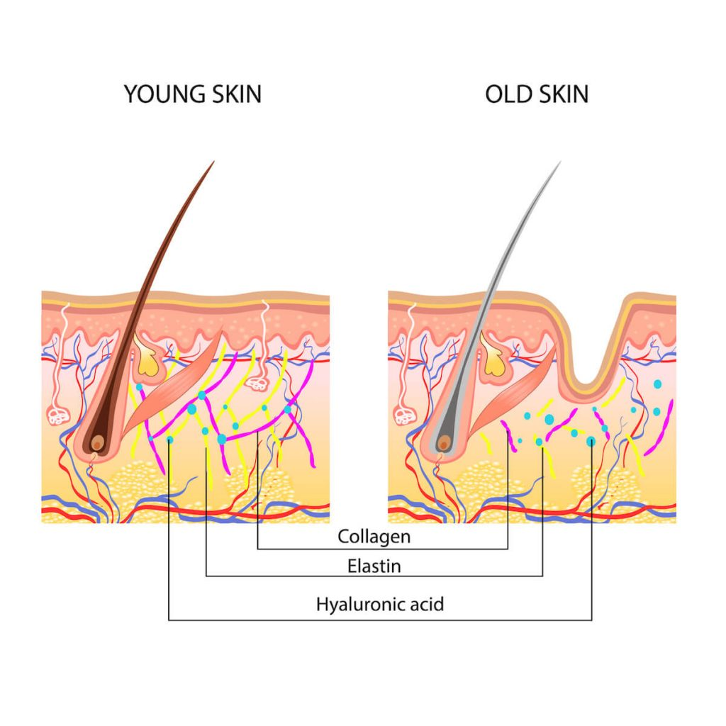 collagen benefits skin