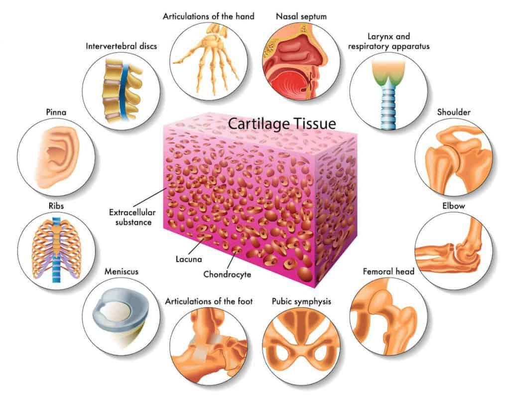 collagen supplements arthritis